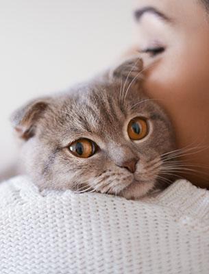 cat one womans shoulder