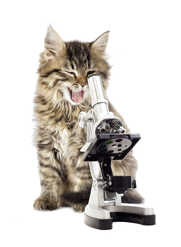 gray kitten and microscope