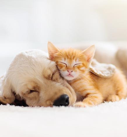 sleeping kitten and puppy on white rug
